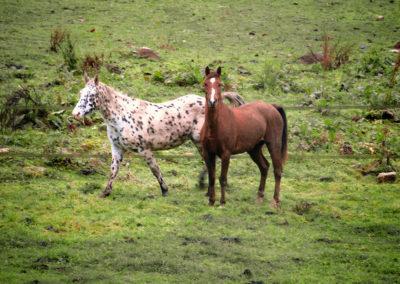 Ponies à Boissy !